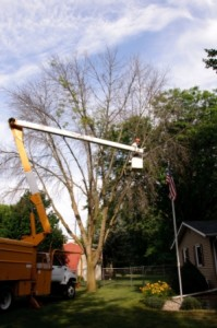 Tree Pruning - Tree Removal - Tree Trimming