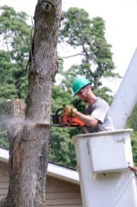 Tree Triming - Tree Removal - Branch Removal - Tall Tree