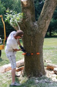 Tree Removal - Precision Tree Cutting - Safety -