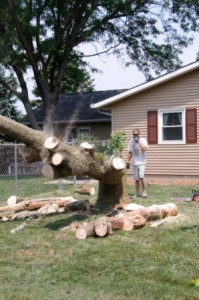 Falling Tree - Cutting Down Tree - Safely Cutting Down A Tree -