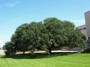 Tree Removal - Services - Tree Pruning