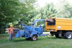 Clean Up - Tree Removal - Branches and Leaves